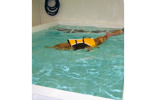 What isCanine Hydrotherapy