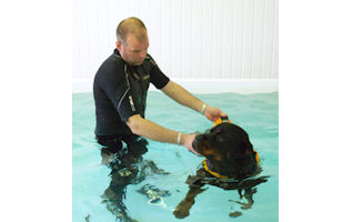 About HolmarshCanine Hydrotherapy