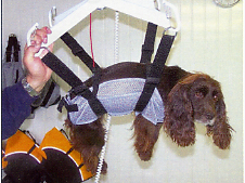 Holmarsh Canine Hydrotherapy - dog on harness