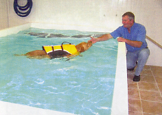 Holmarsh Canine Hydrotherapy -  dog swimming