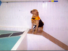 Holmarsh Canine Hydrotherapy -  dog on ramp